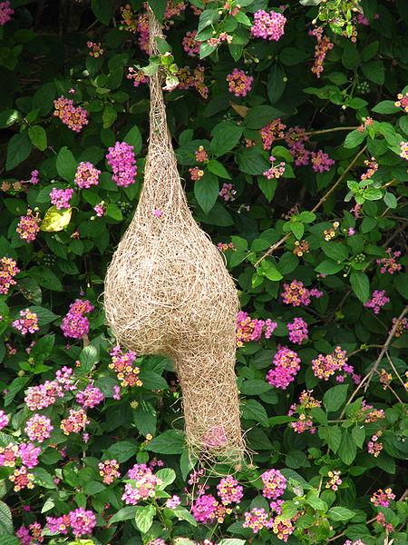 450px-Yelagiri_bird's_nest.jpg